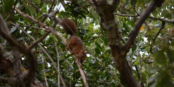 saut d'un ecureuil