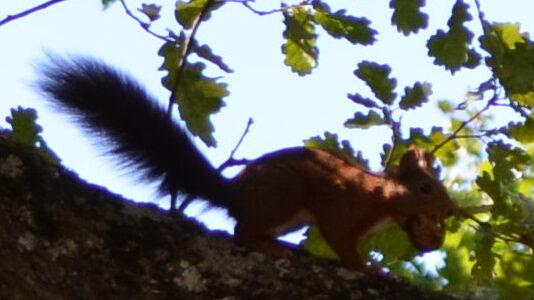 ecureuil 4
