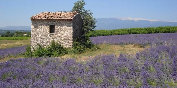 paysage-cabanon-provence[1]